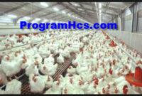 SOC HCS Untuk Ternak Ayam Broiler