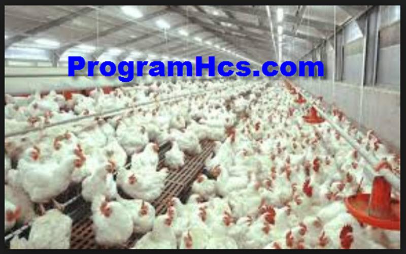 vitamin untuk ayam kate
