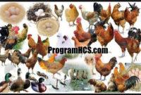 Soc Hcs untuk Unggas