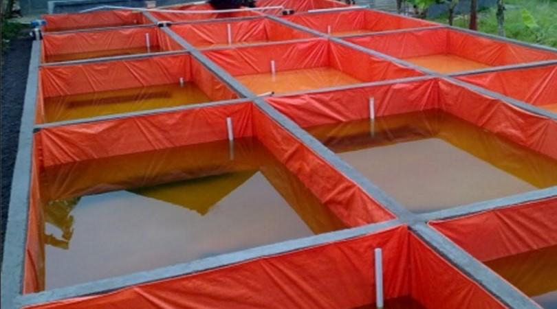 cara budidaya ikan lele di kolam terpal lengkap untuk pemula