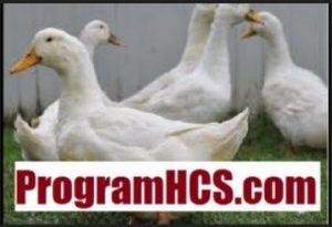 Aplikasi SOC HCS