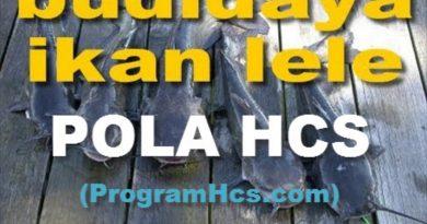 Cara Aplikasi SOC HCS Untuk Pakan Ikan Lele Fermentasi