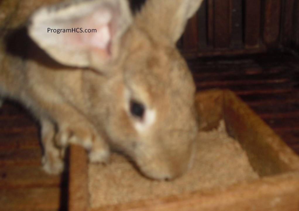 SOC HCS untuk Ternak Kelinci