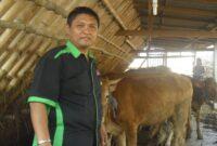 bank pakan untuk ternak sapi