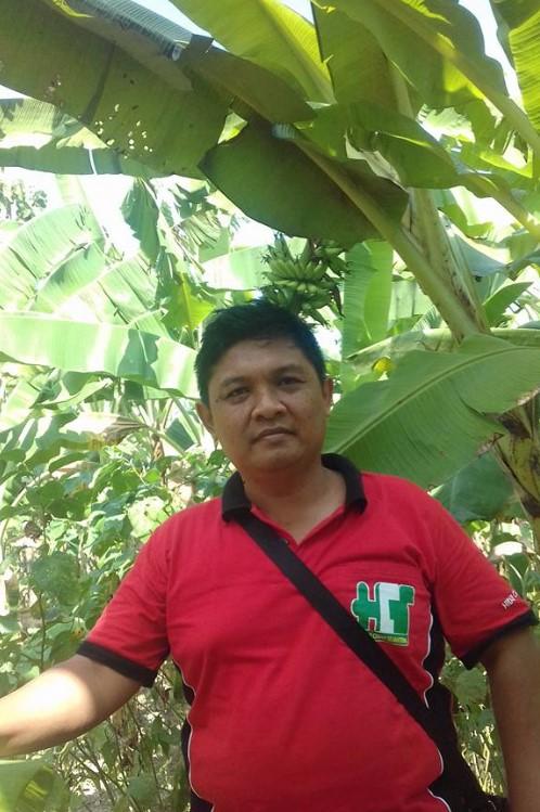 pupuk cair SOT untuk pohon pisang