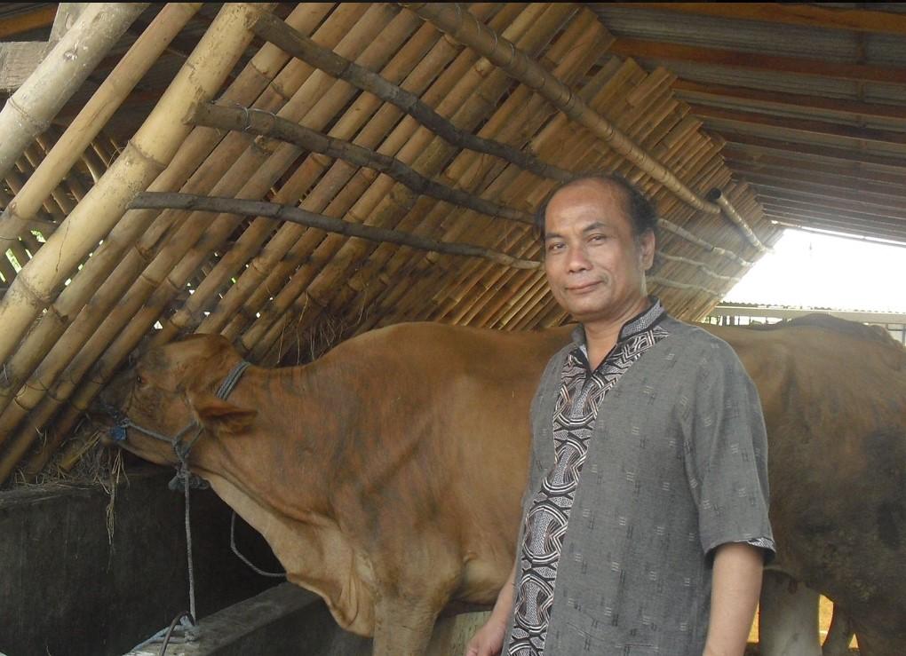 ternak sapi hcs dengan bank pakan