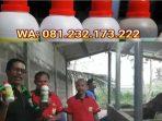 King Master soc hcs untuk Fermentasi Pakan Sapi